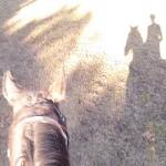 horse-still-