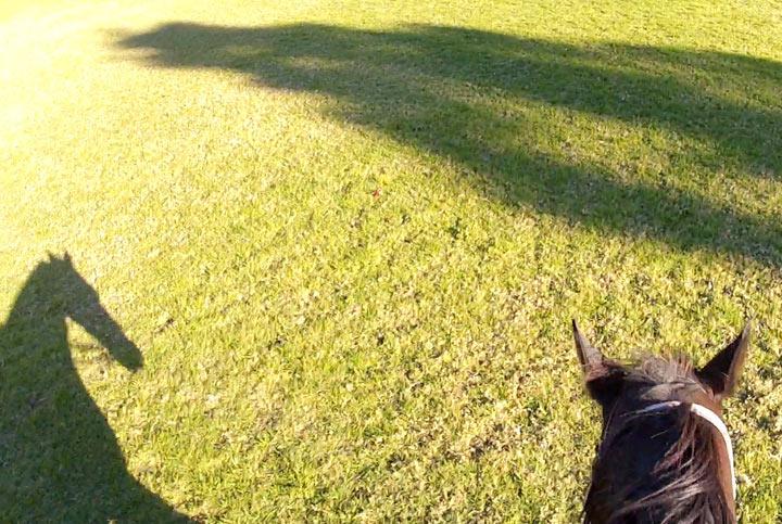 horse-still-2